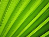 testimonials-palm