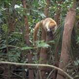 environmental-monkey2